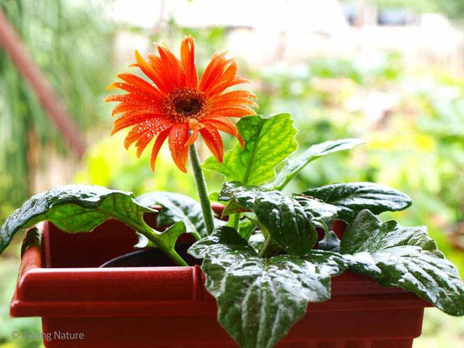 Nhà đẹp đón Tết với những loài hoa đẹp và ý nghĩa